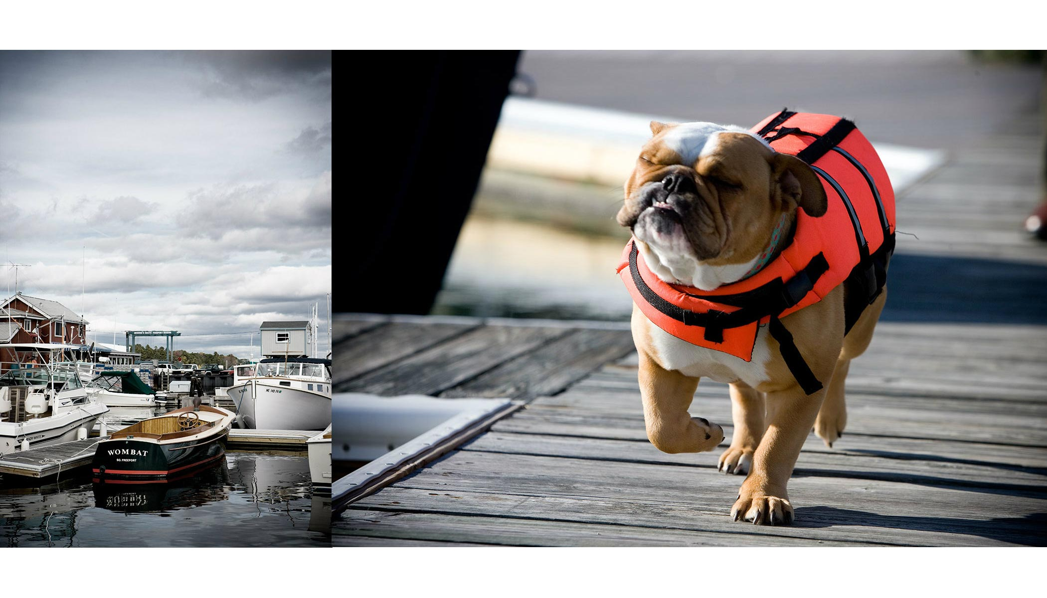 Travel Maine-boat-and-dog